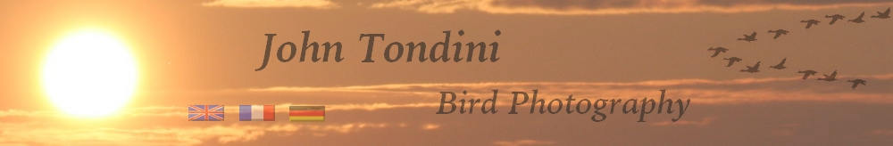 Bird-photography-John-Tondini